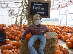 Scarecrow&pumpkins.jpg